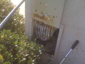 bees in water meter box