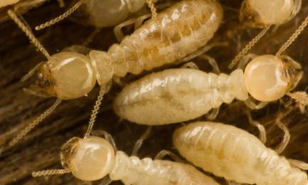 Orange County Termite Removel