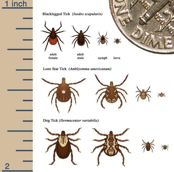 Ticks And Bed Bugs Something Nobody Needs To Have In Orange County