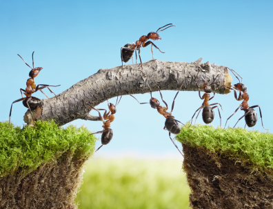 Field Ants OC