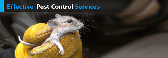 pest control services orange county