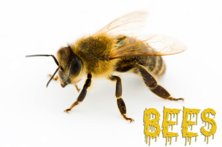 Bees Orange County Pest Control