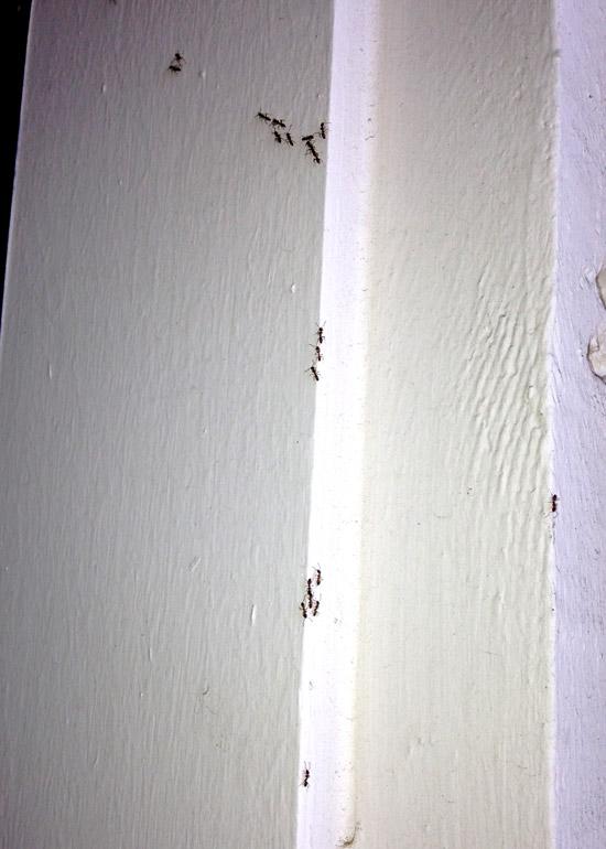 ants-front-door-wall