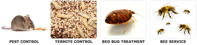 Fountain Valley Pest Control