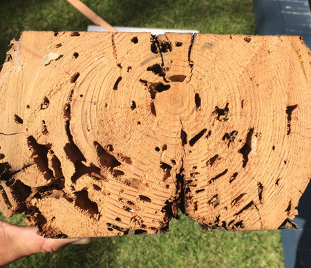 termites-wood-damage