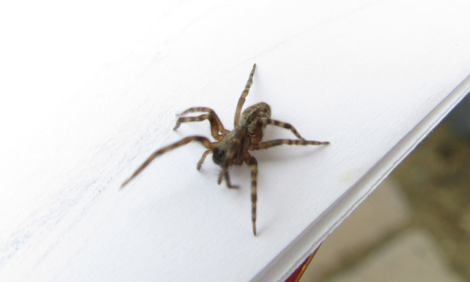 Stop spiders from infesting your home in orange county for How to stop spiders entering your house