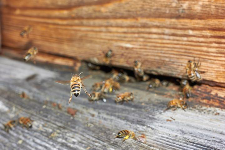 bee-bees-hive-orange-county