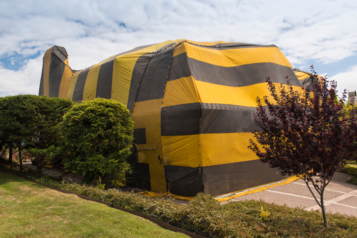 fumigation-orange-county-home
