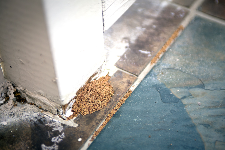 termite-dust-house-damage-wood