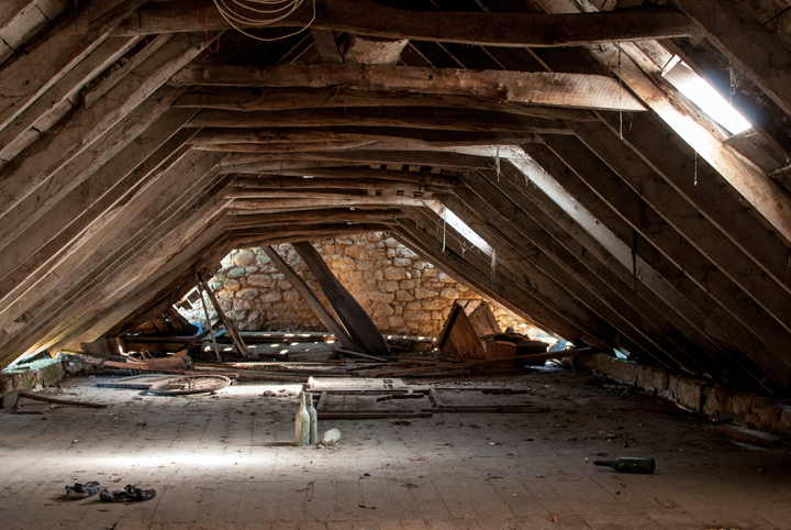 attic-clean-out-pests