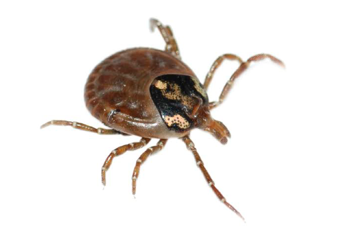 tick-exterminator-socal-orange-county-pest-control