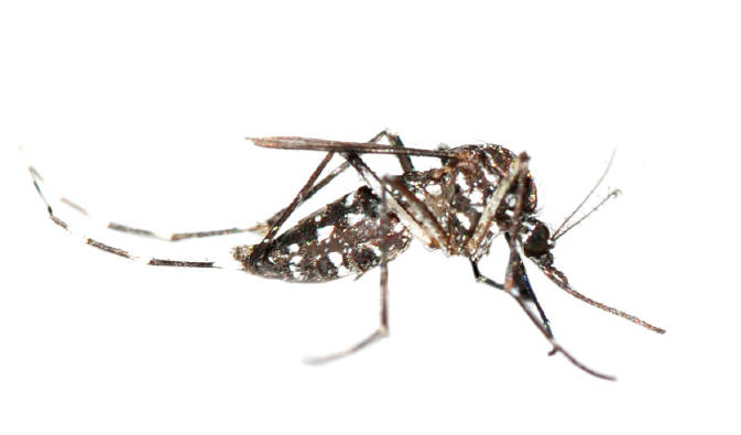 mosquito-exterminator-orange-county-socal-pest-control