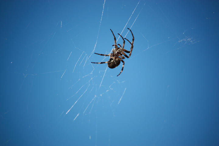 oc-socal-insect-exterminator-spider