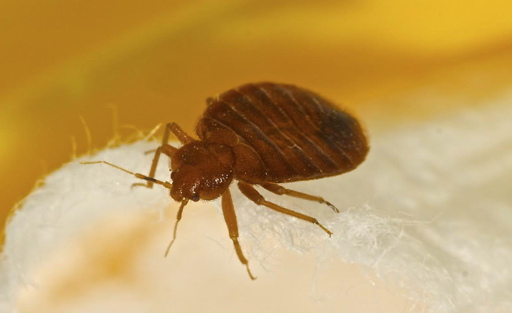 bed-bug-pest-control-oc-socal-exterminator-orange-county