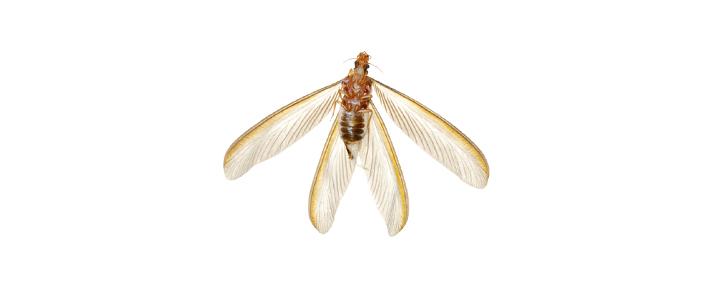 orange-county-southen-california-termite-control-prevention-fumigation