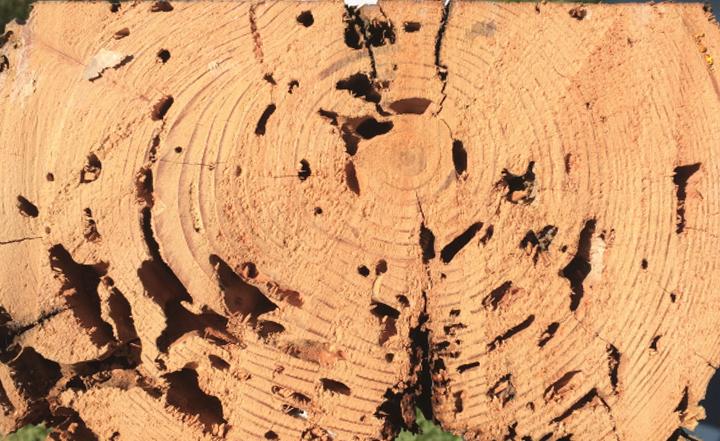 termite-exterminator-fumigation-services-orange