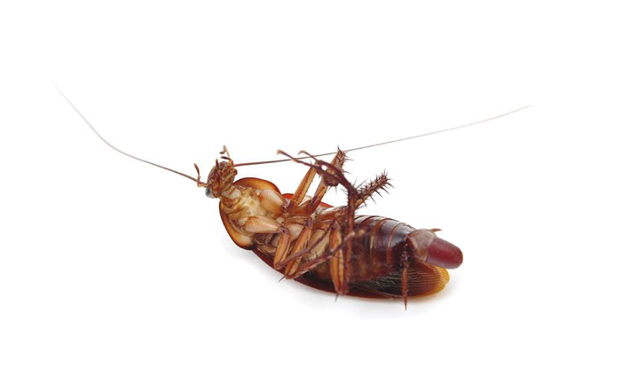 oc-southern-california-cockroach-pest-control-service-huntington-beach-costa-mesa-newport-beach