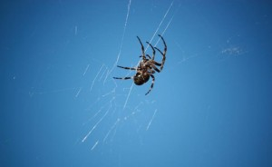 spider-control-oc-southern-california-extermination-infestation-management