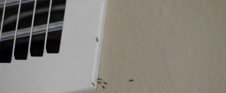 Ants in the Summer! Oh, what a bummer Orange County…