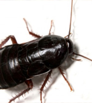 Summer heat and tons of Roach Control in my home. Yikes!!!