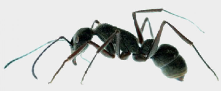 Ants and Spiders in SoCal