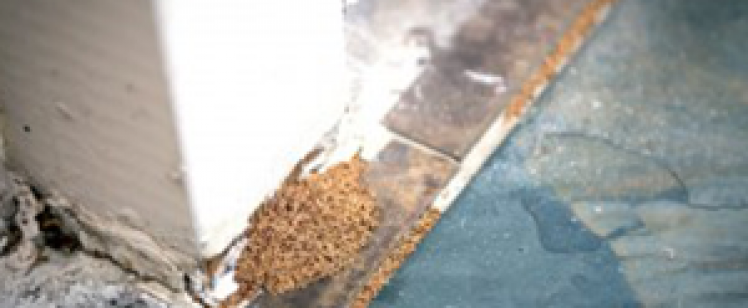 Orange County Pest Control Services