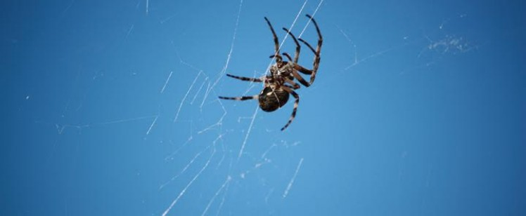 Common Spiders of Orange County