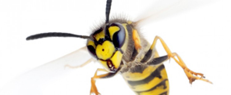 Summer Time Wasp & Yellow Jacket Problems? Call Preferred Pest Control Today!